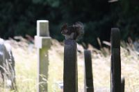 Squirrel on a head stone having breakfast!: Click to enlarge